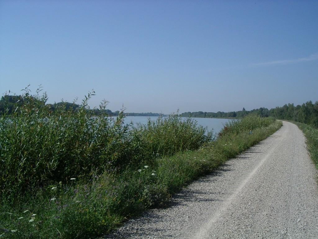 Rhein-Damm