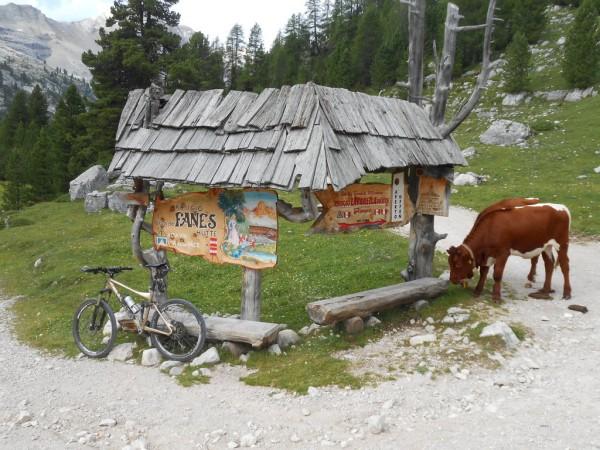 Wegweiser mit Kuh