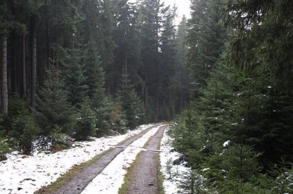 Reste vom ersten Schnee
