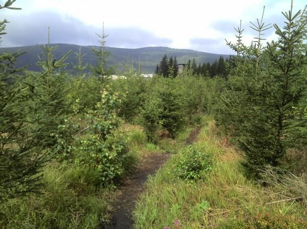Black-Raven-Trail Richtung Erlabrunn